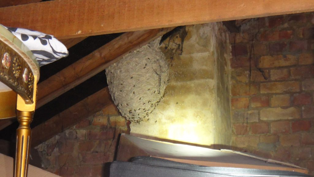 Pest Inspections Mornington Peninsula Wasp Nest