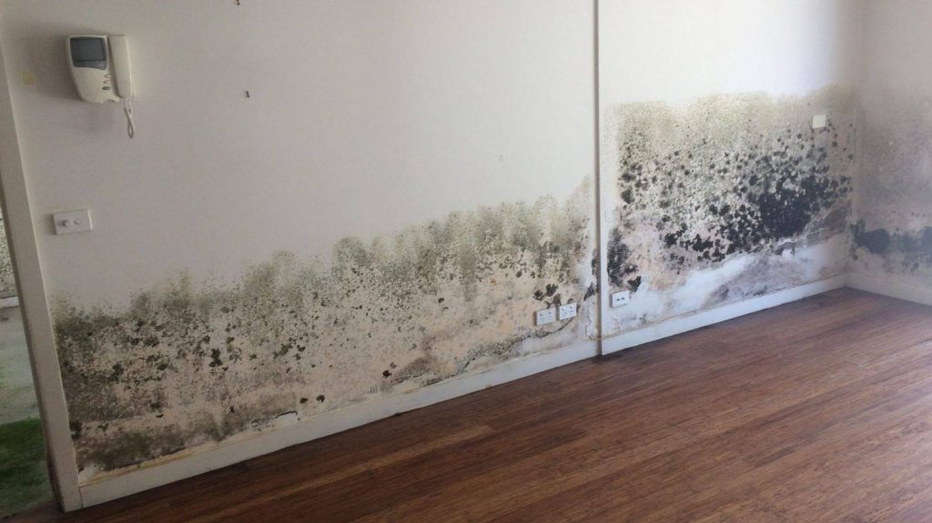 Mould Damage Frankston